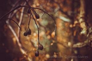 /Cores de Outono 3