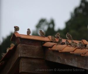 /Happy Bird Hour