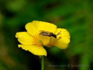 /Abelha e sua flor...(ler...)