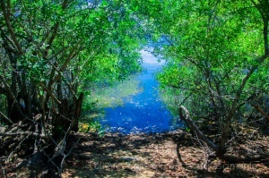 /A beleza do manguezal