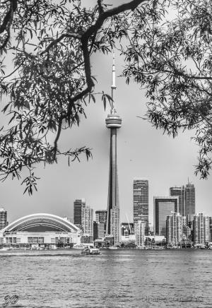 /Toronto entre folhas