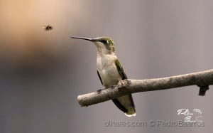 /Bird Hunting