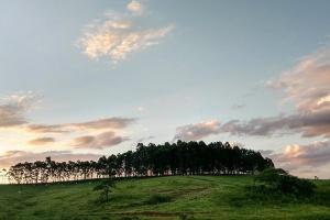 /Por do sol no campo (eucaliptos)
