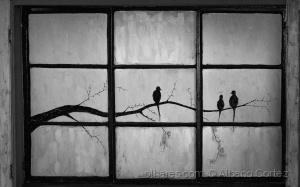 /Uma janela diferente