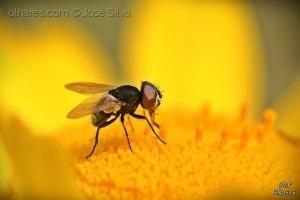 /Little fly...
