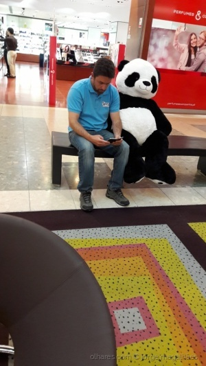 /O urso foi ao shopping