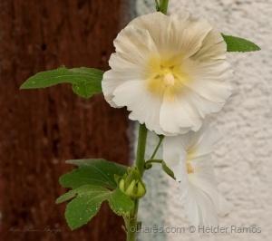 /Juste une fleur.