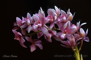 /Orquídeas, para todos.