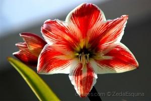 /Flores..........(ler sff)