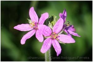 /Uma simples flor