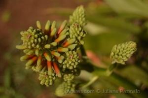 /Quase Flor