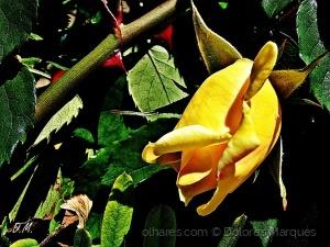 /Flores e Amores