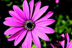 /Flores (2)........(ler sff)