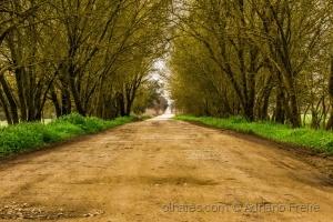 /Será este o caminho?