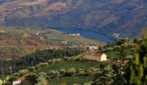 /Vale do Douro
