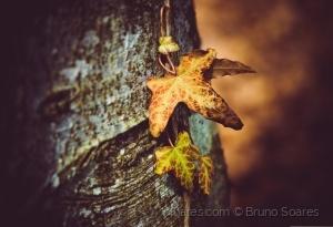 /Cores de Outono 4