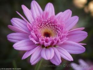 /Flores do Meu Jardim.. (Doce e Charmosa)
