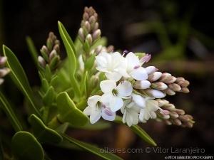 /Flores do Meu Jardim.. (Amanhecendo em Ti.. )