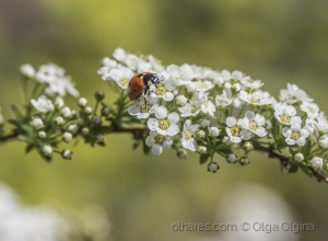 Macro/Ladybird and spring