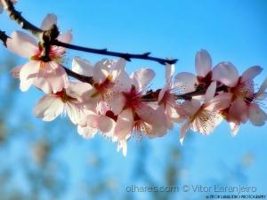 /Flores do Meu Jardim.. (Angelical..)