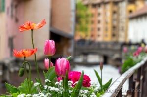 Macro/amour de fleurs