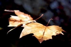 """/""""the autumn leafes"""""""