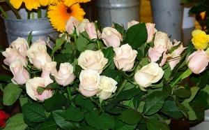/São rosas Senhor, são rosas...