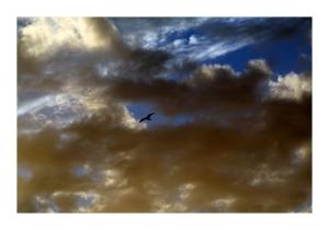 /Pássaro Azul... que há em nós!