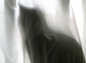 /Fantasma