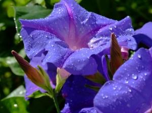 /uma flor do jardim