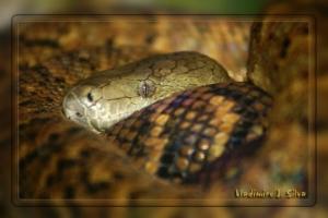 /Snake ...