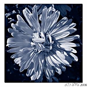 /Flower Duotunada :)
