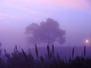 /Nevoeiro matinal.