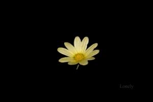 Macro/Lonely