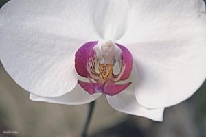 /Orquídea  28