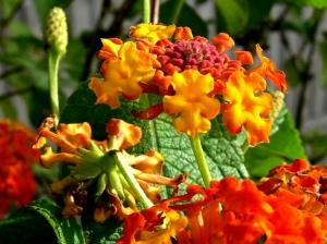 /Flor 3