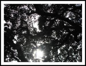 Outros/Um renque de árvores lá longe...