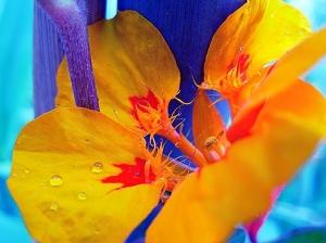 Macro/Cores e flores