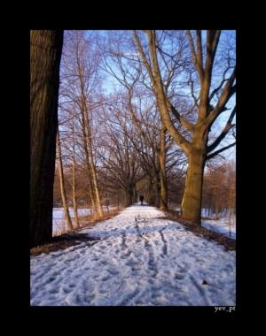 Paisagem Natural/Há caminhos que valem a pena serem percorridos...