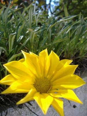 /Há vida no jardim da minha casa!!