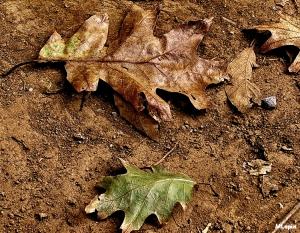 /Autumn Leaves...