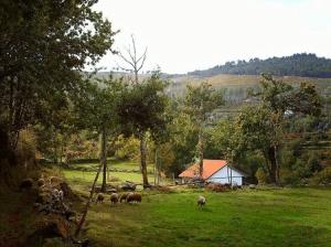 Paisagem Natural/Recordação de um dia no campo