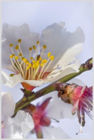 Macro/E a Primavera que tarda em chegar...