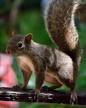 Animais/Simpático roedor