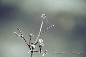 Outros/Restos de uma Flor