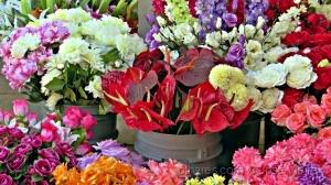 /A beleza das flores