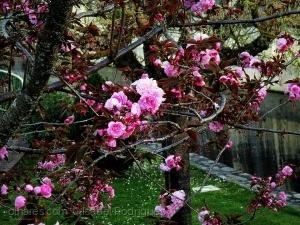 /Primavera na Sertã....