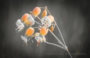 Macro/Flor do campo!