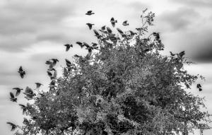 /Why do birds suddenly appear?