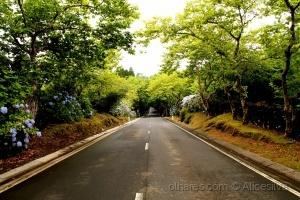 /Uma estrada florida............